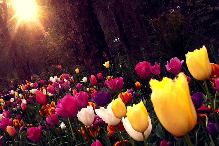 Easter Responsive Readings for Personal & Church Use
